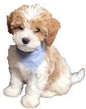 pup cut2.jpg