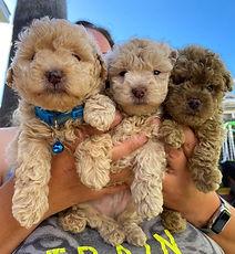 3 pups.jpg