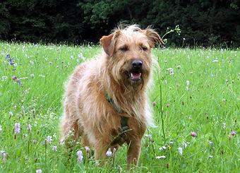 Hund Bonnie lehrte mich, wie wichtig Vertrauen in der Mensch-Hundbeziehung ist