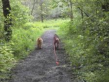 entspanntes Spazieren gehen auch ohne Leine