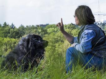 enspanntes Hundetraining in alltäglicher Umgebung