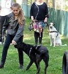 Hundführerschein und Training für Kinder