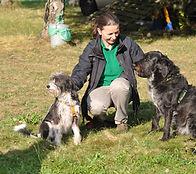 Training für Mehrhundehalter