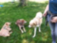 Training mit Hunden us dem Tierschutz in Gruppen- und Einzeluntericht