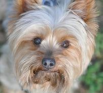 Bratung vor Anschaffung des Hundes. Sowohl Rasshunde als auch Hunde aus dem Tierschutz
