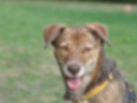 Training für erwachsene Hunde