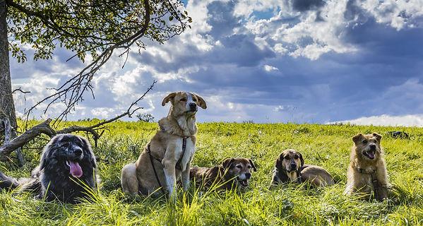Hundetraining in Stuttgart, Ostfildern ud Esslingen