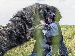 Mensch hilft Hund in Balance zu kommen