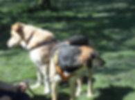 Hundeschule für alle Rasssen