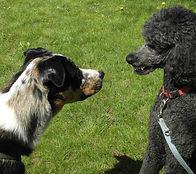 Hunden entspannt begegnen