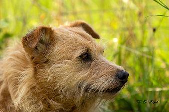 Soyala - lehrte mich, dass Beziehung besser ist als Erziehung und dass der Mensch den Weg der Hunde gehen muss für eine glückliche Beziehung