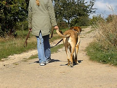 spezalisiert auf Training mit Herdenschutzhunden