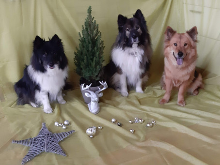 Fröhliche Weihnachten wünschen Euch die Almtaler!