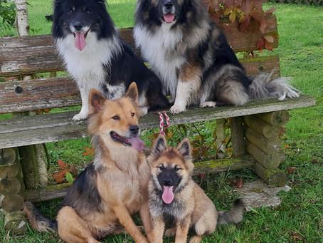 NalaBlue's letzter Spaziergang in EggensteinCity mit Mama Unicorn und  Jacky und Hase💖