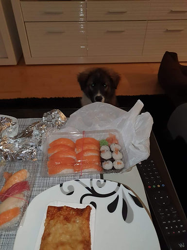 Sushi für Daisy?
