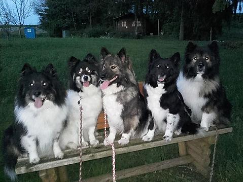Familinbande Jack, Olive, Nelly, Guggi und Hase