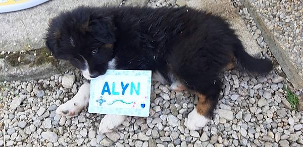Alyn der Erstgeborene Rüde