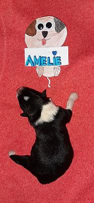 Amelie die Zehnte 356 gr.