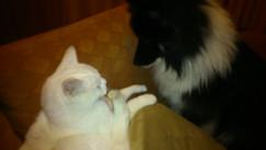 Wiskey und Jack