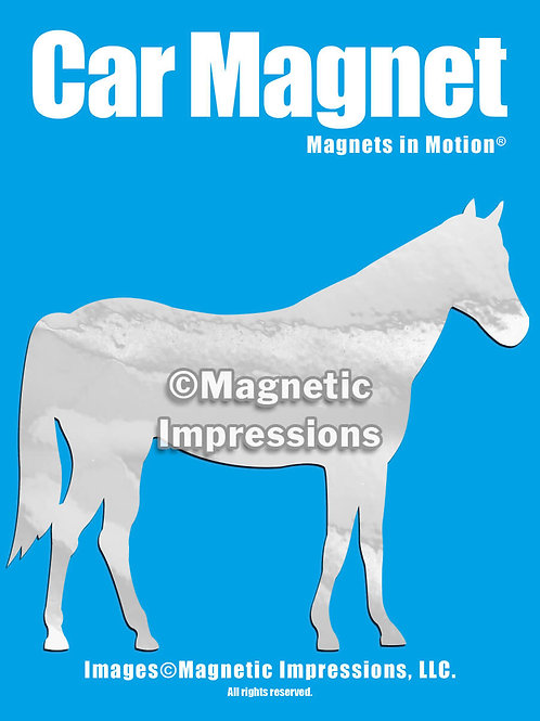 Horse Magnet in Motion