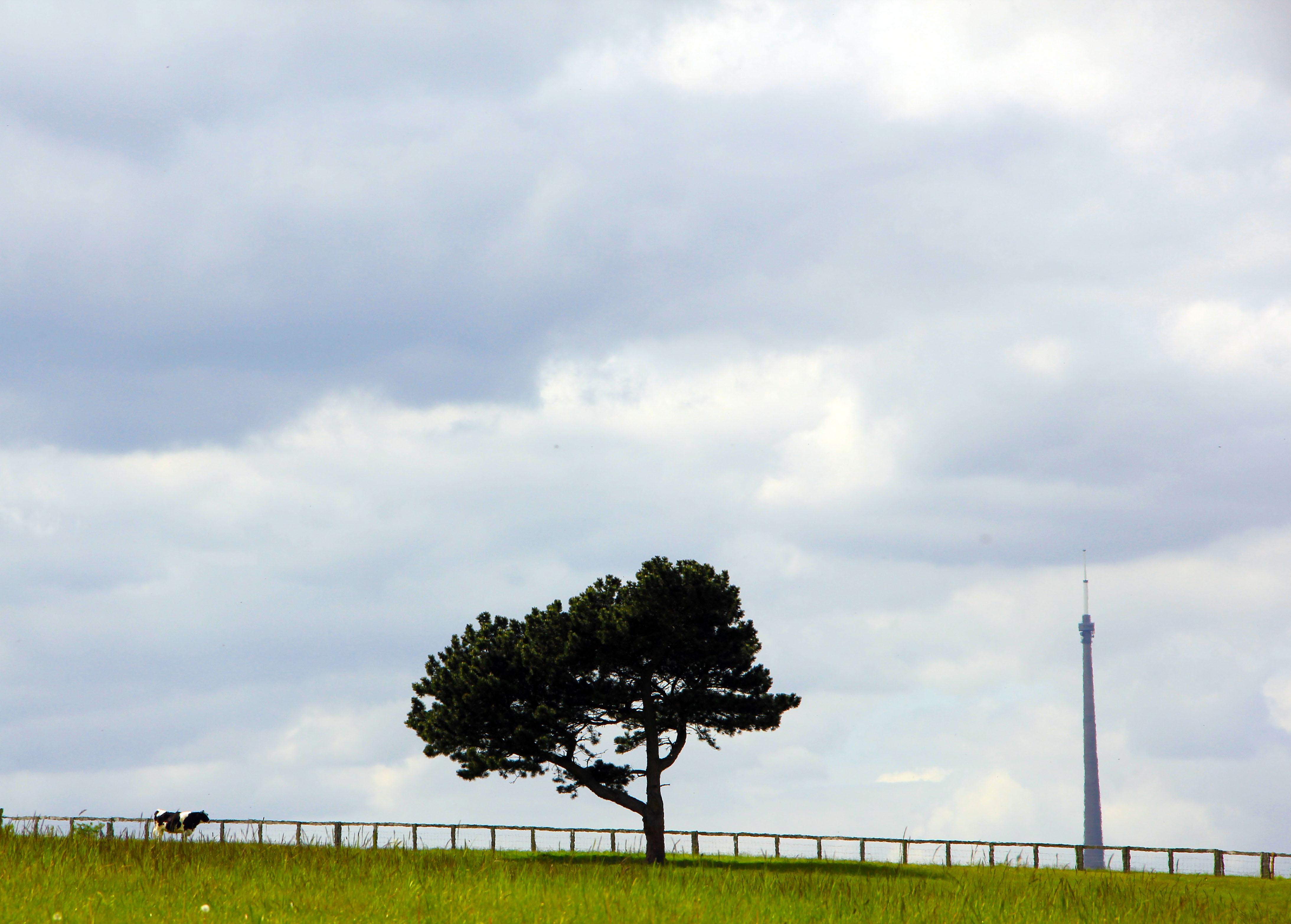 animaltreeman