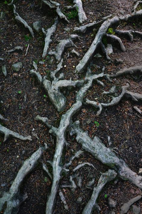 Root Language.jpg