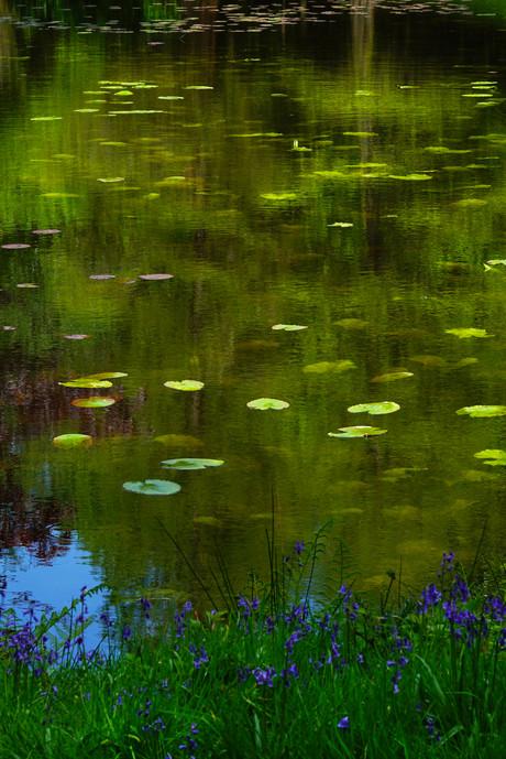 Monet shot.jpg