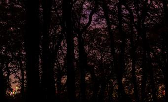 treecity.jpg