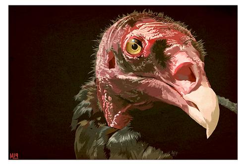 """Vulture"""