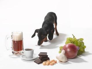 Confira 10 alimentos que pessoas dão para cães e não sabem que podem causar doenças
