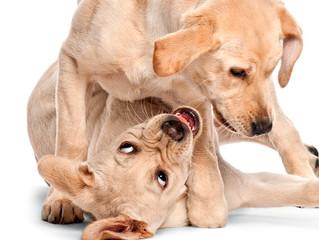 Mordidas entre cães e gatos: cuidados necessários