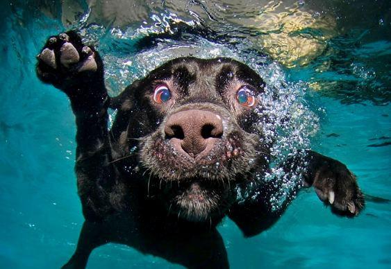 stardog.jpg
