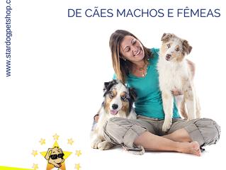 Conheça as diferenças entre cachorros machos e fêmeas