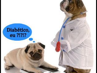 Meu cachorro tem diabetes, e agora?