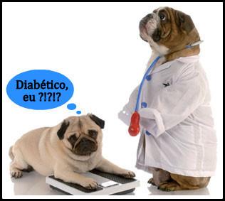 diabetes-canina-01_14-11-12.jpg