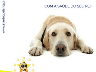 Cães sedentários: como evitar