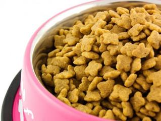 Até que idade seu cachorro deve comer ração para filhote?