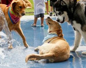 No calor, os animais precisam de atenção redobrada!