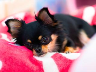 Dica caseira para curar diarreia em cães