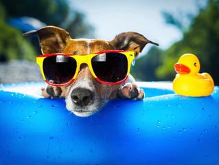Glaucoma: doença atinge cães e pode levar à cegueira