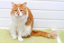 Problemas renais em cães e gatos - De olho no xixi!