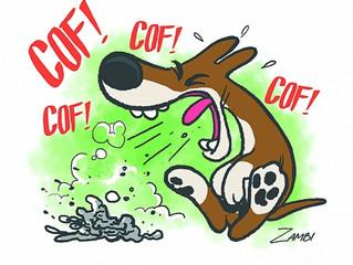Cuidado com o frio! Saiba o que pode significar a tosse em cães durante as baixas temperaturas