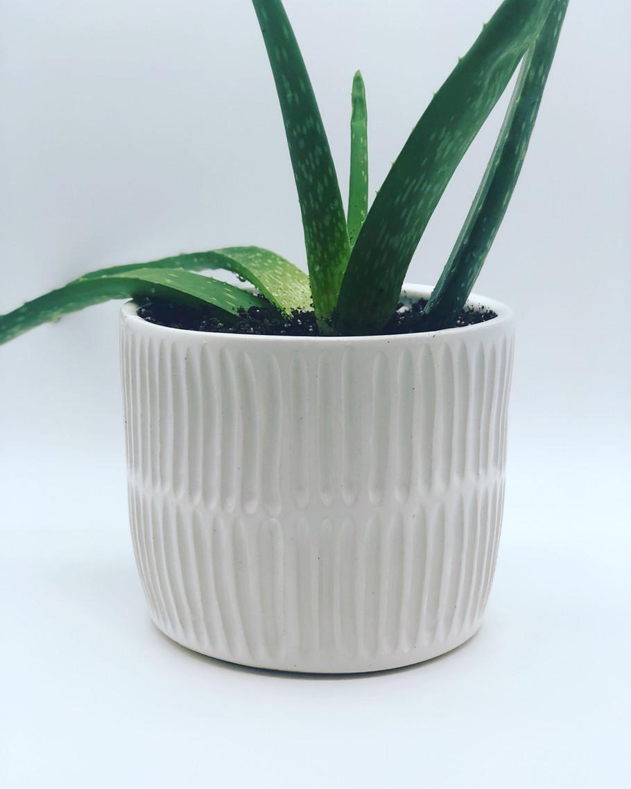White Line Planter