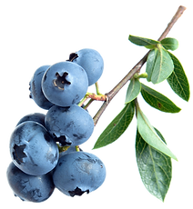 blueberries-539134.png