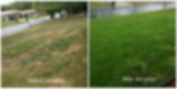 before-after-lawn.jpg