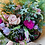 Thumbnail: WRAPPED BLOOMS