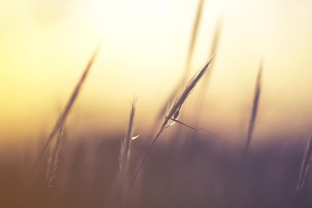Getting positive feeback is calming like the sun shining through the grass.