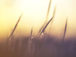 ❀ Ritorno alla Natura