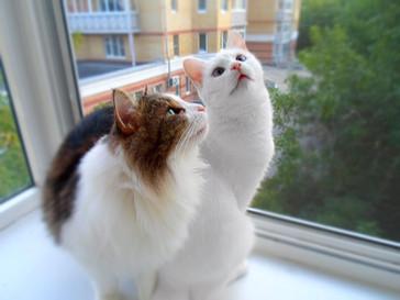 Аспирин и Кетти 6 месяцев дома