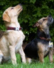 dogs-930727_1920.jpg